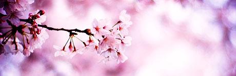 relationship-cherryblossoms.jpg