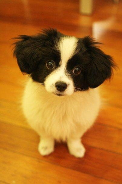 Missing dog Blackie