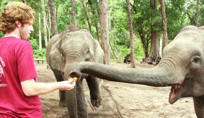 Adam feeding bananas to Elephants Havelock Andaman Islands India